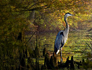 Cypress Knees Digital Art Posters - Great Blue Heron Wading Poster by J Larry Walker