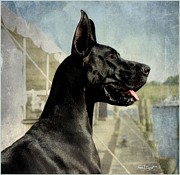 Great Dane Posters - Great Dane Poster by Fran J Scott