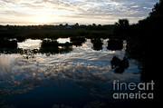Green Cay Wetlands, Fl Print by Mark Newman
