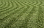 Mow Prints - Green grass pattern. Print by Fernando Barozza