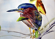 Randy Bell - Green Heron