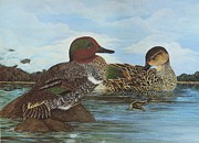 Ducks Paintings - Green Wings along the Susquehanna by Gloria S Schloss