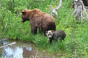 CJ Teal - Grizzly Ma and Cub