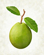 Fresh Green Painting Framed Prints - Guava Framed Print by Danny Smythe