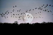 Geese And Moon Prints - Guided by the Moon Print by Larry Trupp