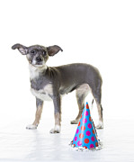 Pet Photo Prints - Happy Birthday Print by Edward Fielding