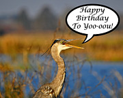 Grey Heron Framed Prints - Happy Heron Birthday Card Framed Print by Al Powell Photography USA