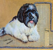 Cuban Mixed Media - Havanese Cuban dog by JAXINE Cummins