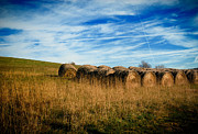 Harvesting Metal Prints - Hay Bales and Contrails Metal Print by Amy Cicconi