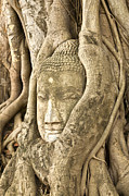 Tree Roots Photo Metal Prints - Head of Buddha Ayutthaya Thailand Metal Print by Colin and Linda McKie