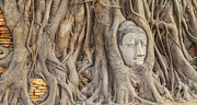 Ayutthaya Framed Prints - Head of Sandstone Buddha Framed Print by Anek Suwannaphoom