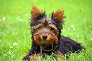 Cute Dog Photos - Hello Toby by Angela Doelling AD DESIGN Photo and PhotoArt