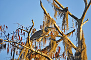 Al Powell Photography - Heron On High