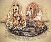 Puppies Drawings Framed Prints - Hesser Puppies Framed Print by Linda Simon
