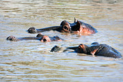 Eyes Art - Hippopotamus group in river. Serengeti. Tanzania by Michal Bednarek
