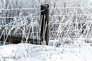 Rural Scenes Prints - Hoar Frost on the Fence Print by J McCombie