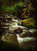 Old Growth Prints - Hoh Stream Print by Stuart Deacon
