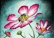 Debrah Nelson - Honey Bee on Cosmo Flower