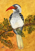 Hornbill Painting Framed Prints - Hornbill Framed Print by Stef Espag