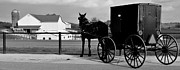 Amish Buggy Photos - Horse and Buggy and Farm by Robert Harmon