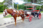 Carriage Horse Photos - Horse-drawn Carriage by Valentino Visentini