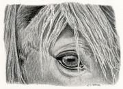 Cowboy Pencil Drawings Framed Prints - Horse Eye- Soulful Framed Print by Sarah Batalka