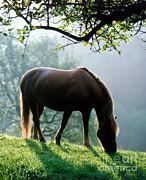 Hans Reinhard - Horse