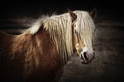 Angela Doelling AD DESIGN Photo and PhotoArt - Horse Portrait