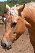 Mary Almond - Horse Portrait