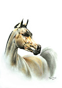 Horse Drawing Metal Prints - Horse Portrait Metal Print by Tamer Elsharouni