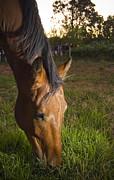 Tim Hester - Horse