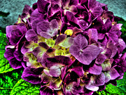 Burgeon Prints - Hortensia Print by Nina Ficur Feenan
