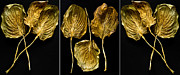 Gold Leave Framed Prints - Hosta Triptych Framed Print by Roger Lapinski