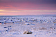 Symbolic Waiting Prints - Hudson Bay Landscape Print by Don Johnston