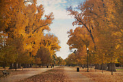 Golden Leaves.beauty Prints - I Dream In Color. Print by Carolyn Rauh