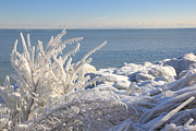 Seascape. Winter Prints - Ice Foliage Print by Charline Xia