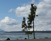 Patricia Januszkiewicz - Ice On Yellowstone Lake