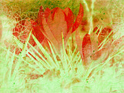 Abstract Flower Photo Framed Prints - In the Garden Framed Print by Ann Powell