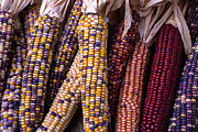 Corns Photos - Indian Corn by Garry Gay
