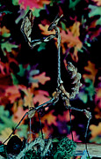 Etc. Art - Indian Rose Mantis Gonglus Gongylodes Wandering Violin Mantis Full Body Closeup          by Leslie Crotty