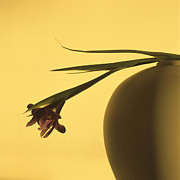 Flowerpot Photos - Iris by Bernard Jaubert