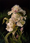 Diane Kraudelt Art - Iris In Bloom 3 by Diane Kraudelt