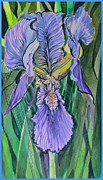 Garden Drawings - Iris by Mindy Newman