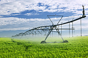 Crops Art - Irrigation equipment on farm field by Elena Elisseeva