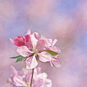 Sakura Photo Posters - It Must Be Poster by Kim Hojnacki