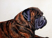 Brindle Prints - Jersey Joe Print by Adele Pfenninger