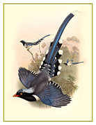 Stone Lithography Digital Art - John Gould Birds by Gary Grayson