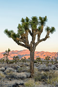 Doug Oglesby Framed Prints - Joshua Tree Framed Print by Doug Oglesby