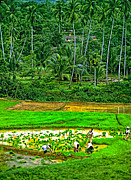 Rice Paddy Posters - Jungle Homestead Poster by Steve Harrington