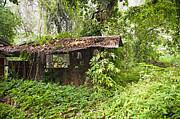 Tim Hester - Jungle Hut